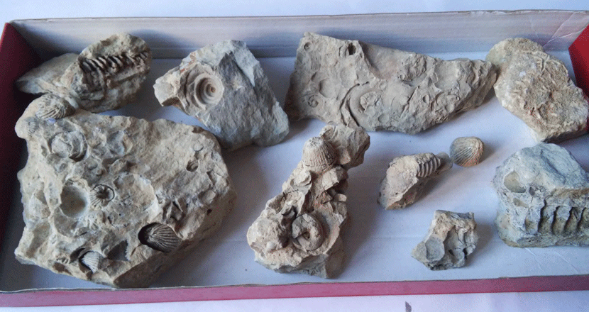 Ordovician-fossils-Wisconsin.png